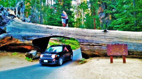 Sequoia National Park 3