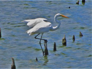 Heron in the Great Salt Pond