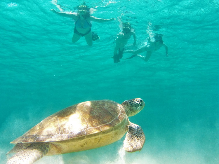 Tobago Cays turtles 1