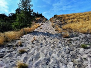 Curonian Spit - Sand Dune
