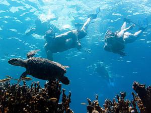 Snorkeling below turtle