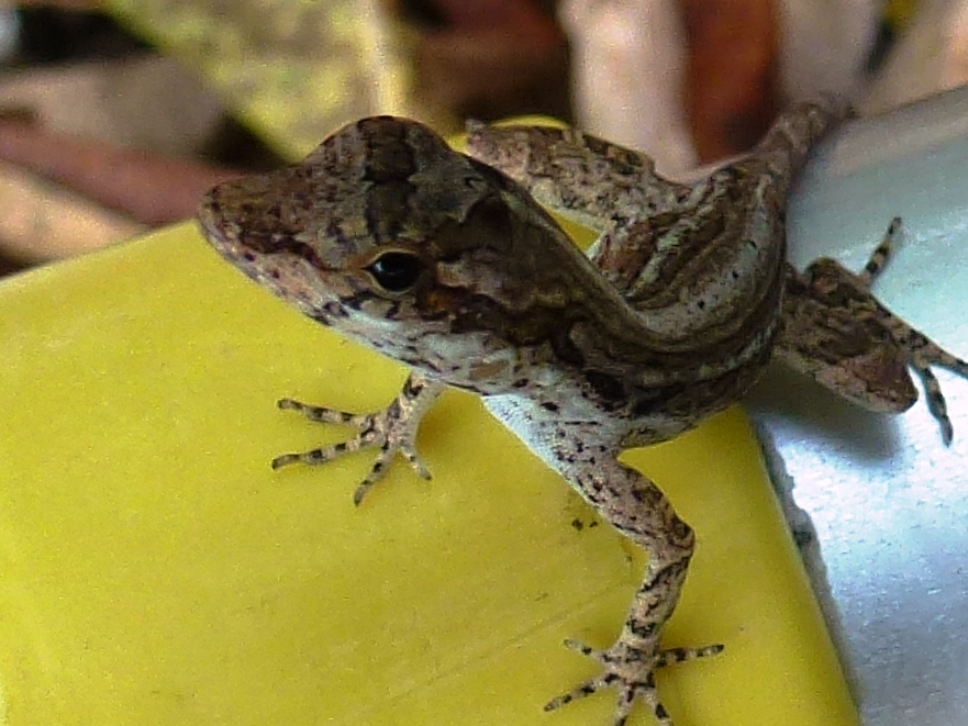 Small lizard up close