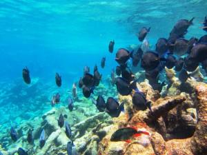 Buck Island snorkeling