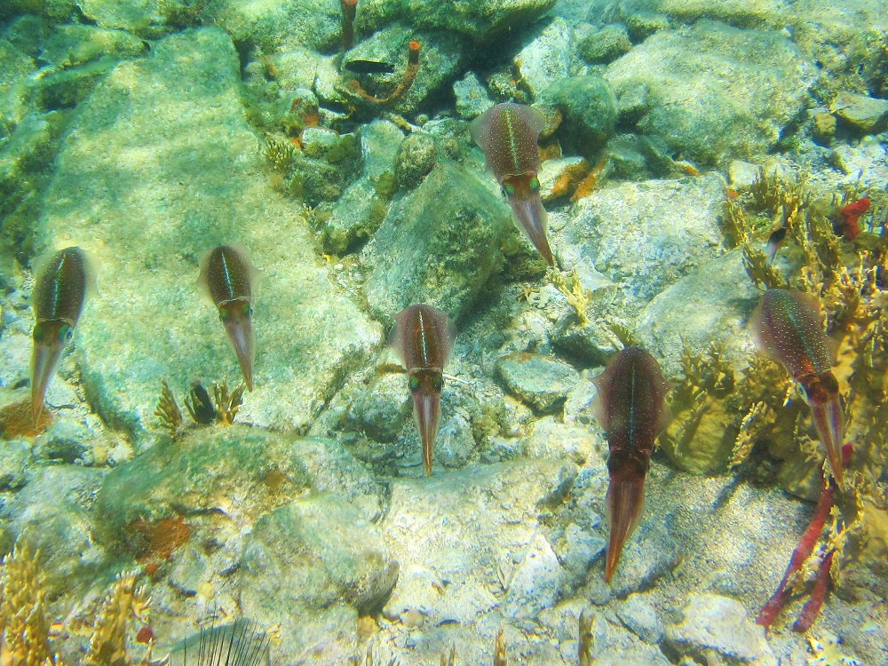 Group of squid