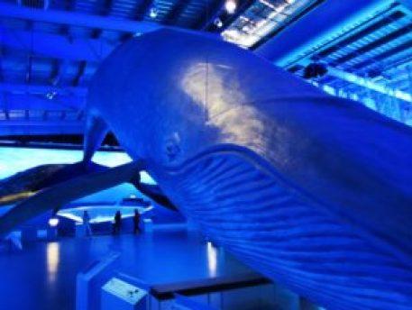 Iceland - 1 Reykjavik - Whale Museum