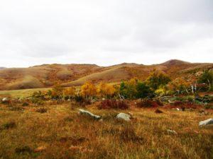 mongolia-6-hustai-np