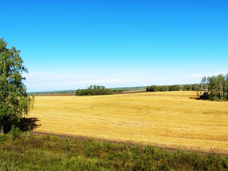 russia-train-4-scene-field