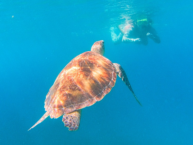 Face to face with a turtle