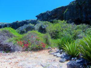 Cliff of Barbuda