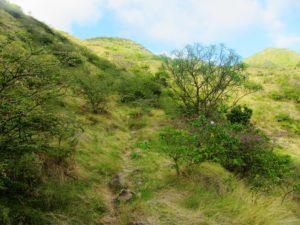 Montserrat - Hiking - Trail