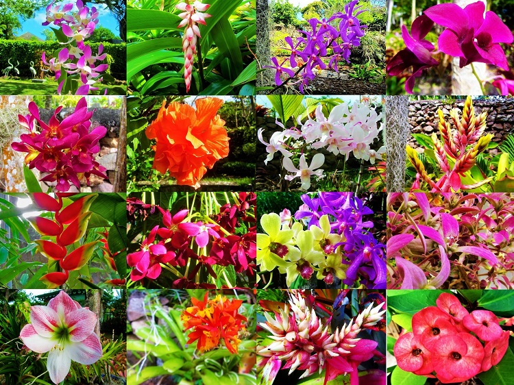 Flower Collage from Nevis