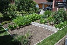 zelenjavni vrt-0574