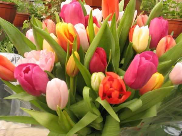 Тюльпаны фото | Галерея красивых фото, история и легенды