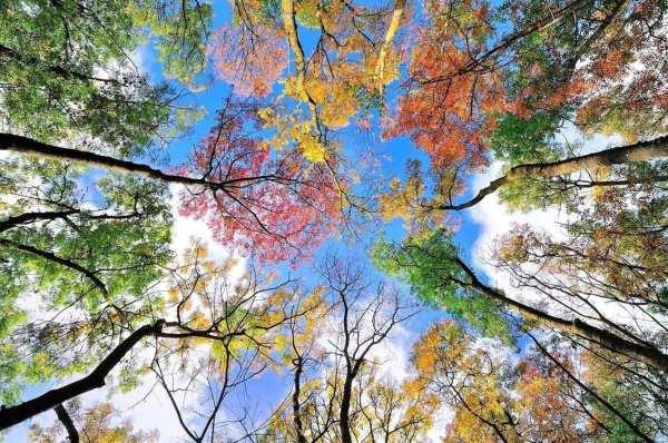 Грустная осень на фото