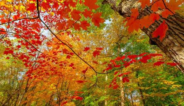 Осень на фото | Галерея красивых фото