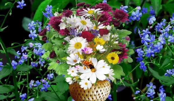Фото цветы полевые   50 красивых фото