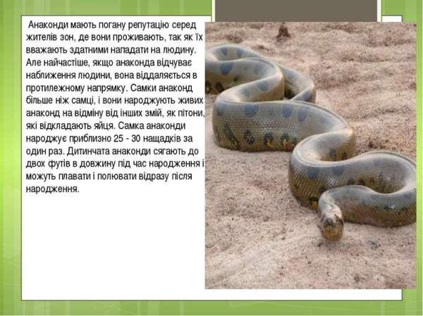 анаконда - презентація з я і Україна