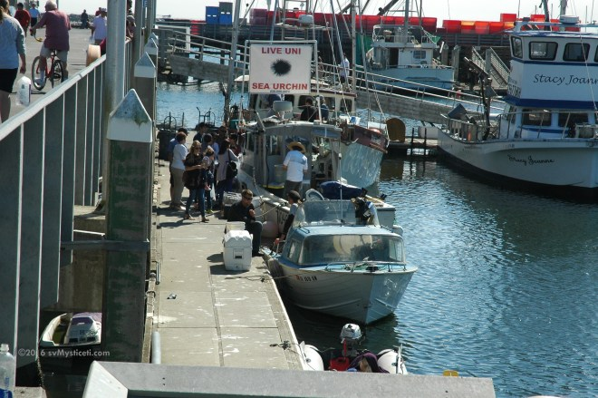 Many boats sell directly to the public.  The weekends also bring lots of people out to sail, kayak, wind surf, paddle board, fish and generally mill about in the marina and the seafood restaurants and the few local shops.