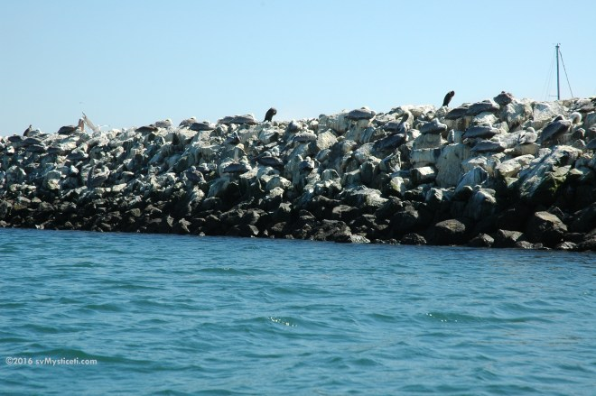 The marina is behind a second breakwater, but is it made of rocks or resting birds?  Hint: zoom in, look close, start counting.