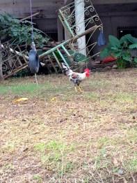 La Cruz Chicken