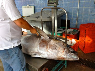 New arrival to fish market 130lbs yellow fin tuna