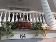 Lounging cats of Charleston