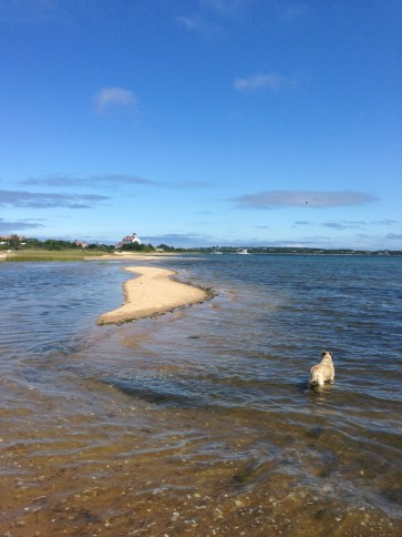 Lucy taking a dip in the waters of Block Island
