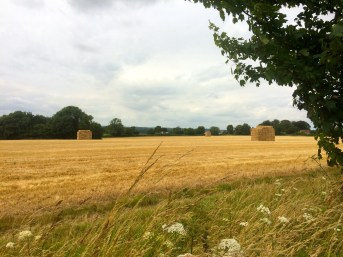 They seem to grow a lot of hay in the UK.