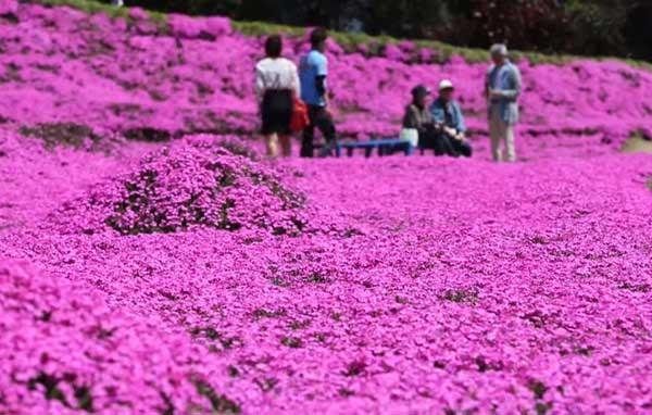 Япония-градина