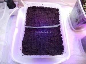 तंबाकू की खेती