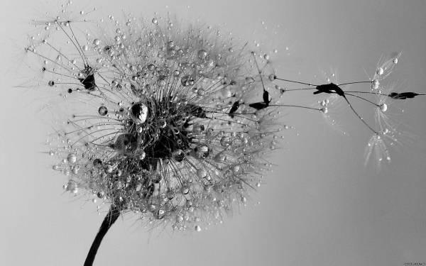 Дождь Черно-белое Фото