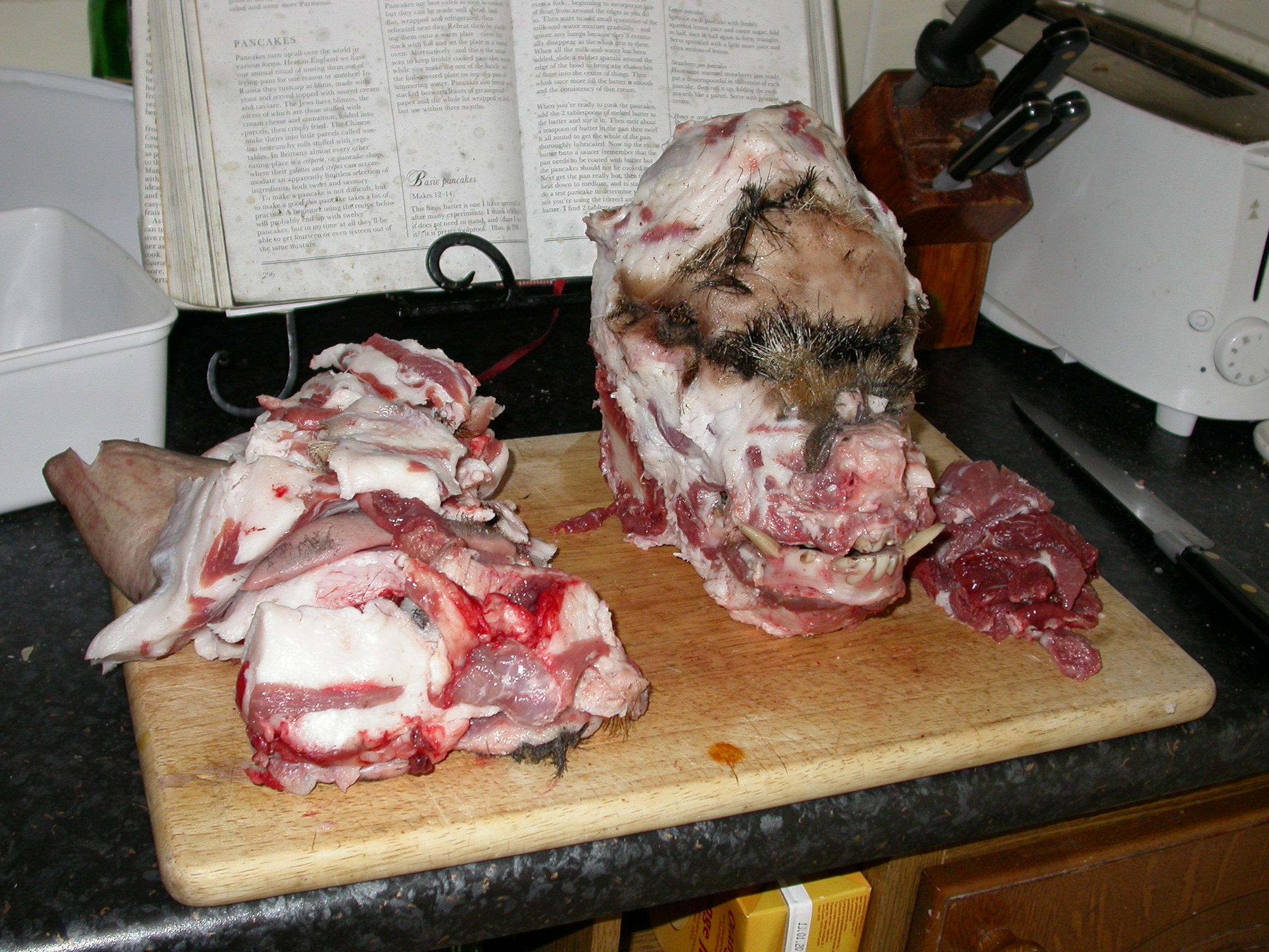 Pig head, defleshed