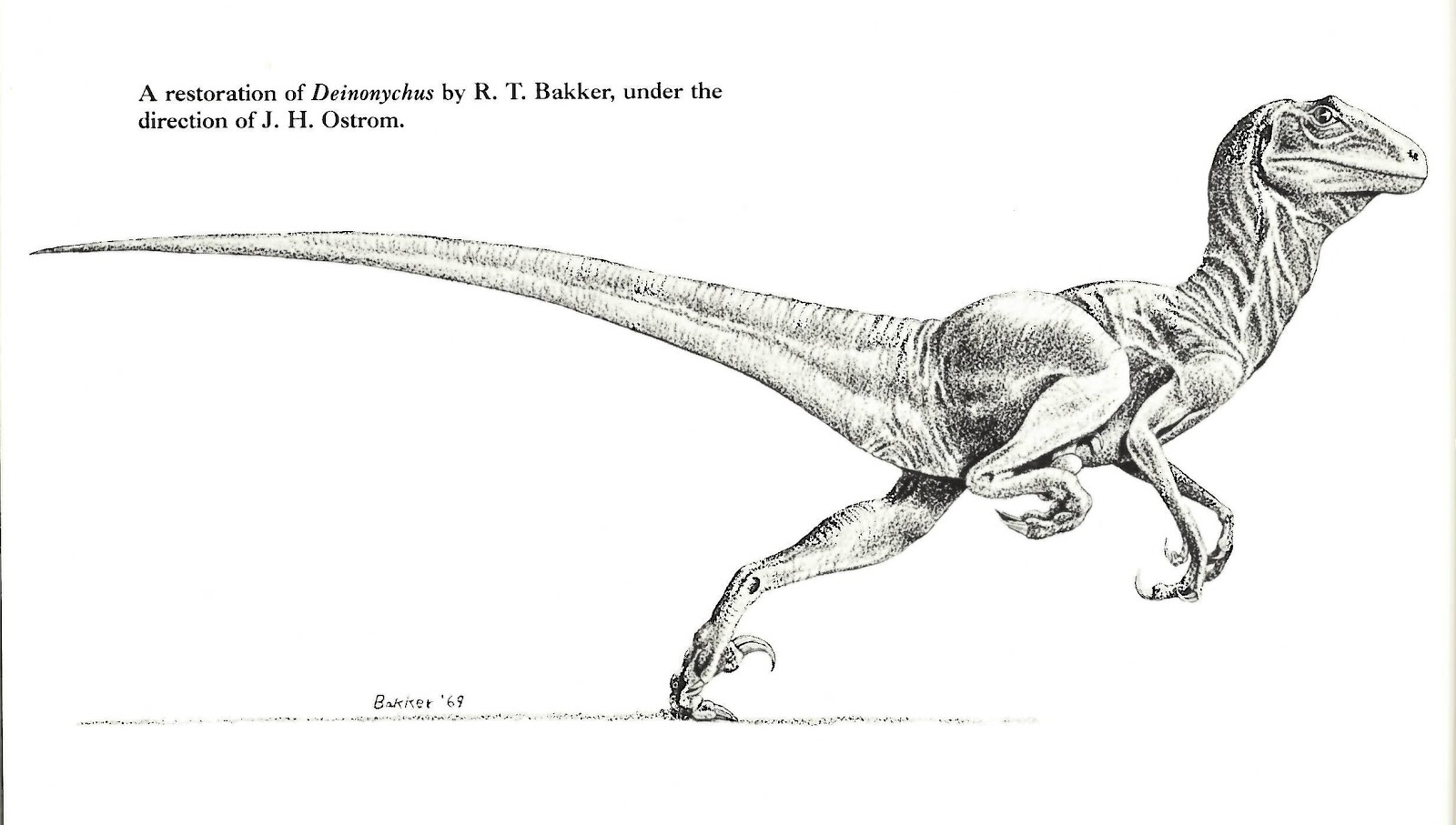 Fluffy And Feathery Dinosaurs Were Widespread