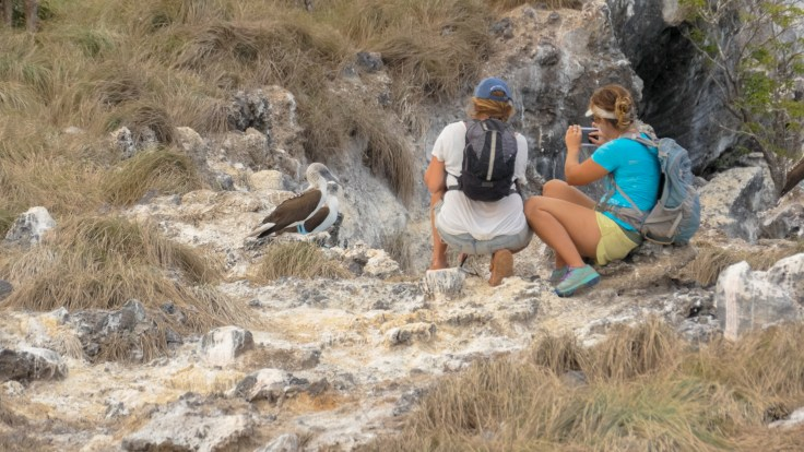 Shannon and Jess getting up close to some blue boobys
