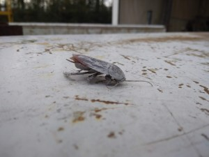 Cockroach which flew into the bubble while we were painting