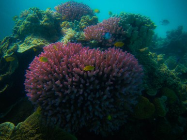 Coral at Lady Musgrave Island