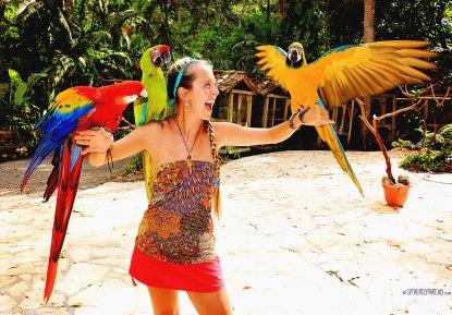 #Macaw Mountain_Jessie1