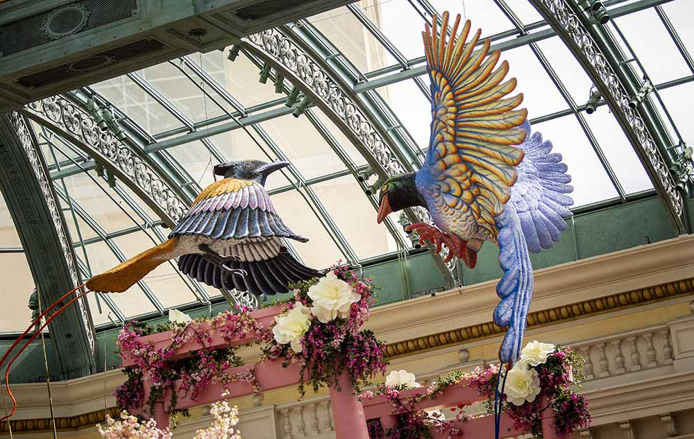 Bellagio Conservatory & Botanical Gardens Spring 2019 Display