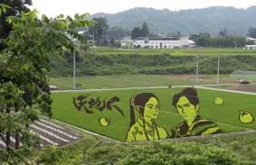 japan-rice-crop-art-3