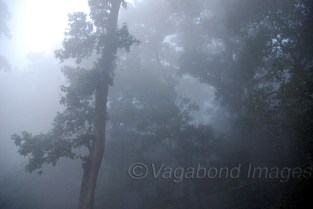 Dudhwa forest enveloped in early morning mist