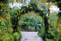 Arch and floral Art