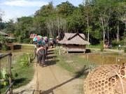 Elephant safari at Phuket, Thailand