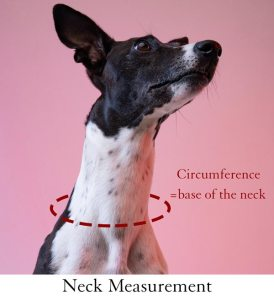 How to measure a dogs neck for collars and clothing. Circumference around the base of the dogs neck