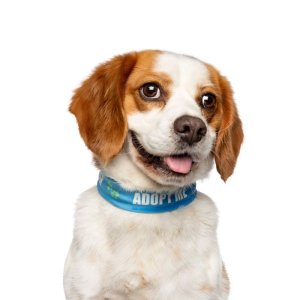 RSPCA NSW beagle up for adoption is featuring in the charity book