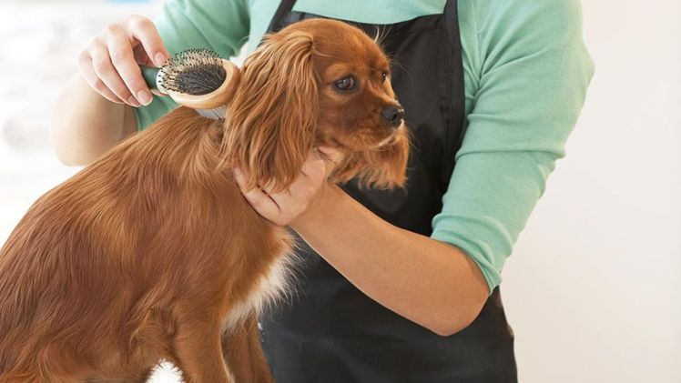 The Ultimate Guide to Grooming and Bathing Your Dog