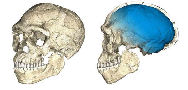Композитная реконструкция черепа человека из Джебель Ирхуд