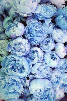 Swatiness-blue Aesthetic Inspiration 25