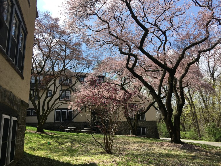 Image shows the exterior of Mary Lyon dorm, a pale yellow and brown building with blossoming pink cherry trees in front of it