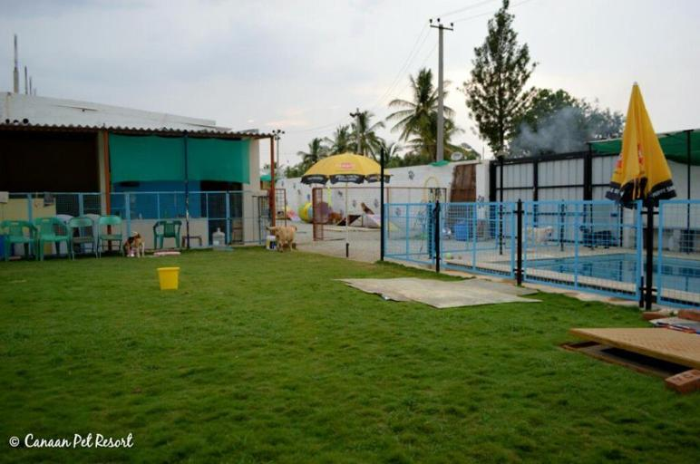 Dog Friendly Swimming Pools in Bangalore Where You Can Swim With Your Pooch