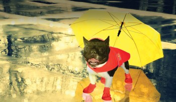 Tips to Keep Dogs Healthy in Rainy Season